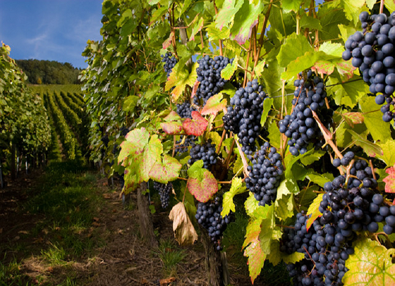 Renowned Wineries Nearby